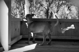 Ruler of the Dog Park