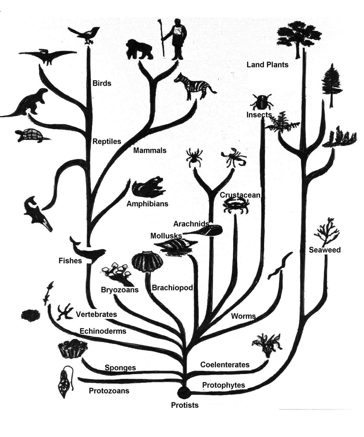 Chapter 26 Phylogeny And The Tree Of Life