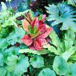 tropical-shade-planting