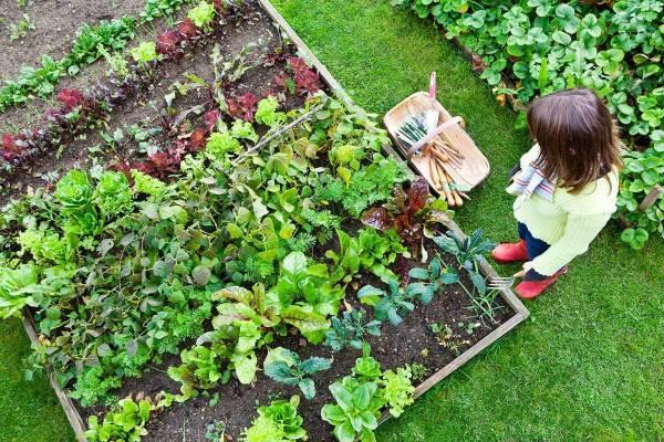 Sized_Backyard-Veggie-Garden