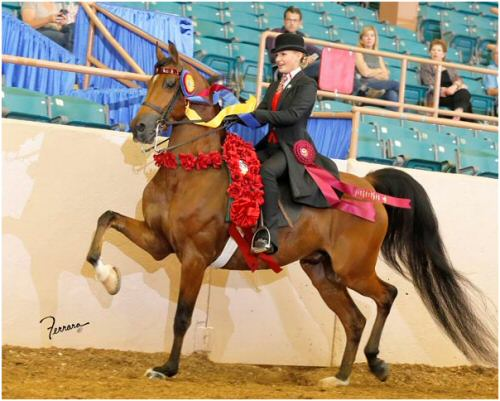 Nikki and Red - Sure Fire Redemption - at Nationals