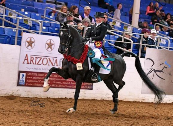"Scottsdale's ""Amazing"" Arabian Horse Show, Feb. 2 – 25"