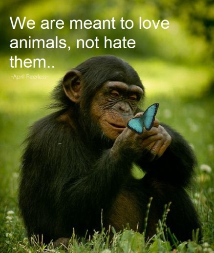 We are meant to love animals, not hurt them.. Money should never be more important than they are… A.Peerless