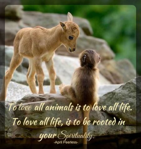 To love all animals is to love all life. To love all life, is to be rooted in your spirituality. To be rooted in your spirituality, is beautiful.. April Peerless