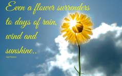 It is as a flower surrenders to days of rain, wind and sunshine. Today I choose to be grateful. ~April Peerless