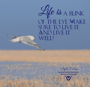 If your lost find yourself. If your in pain, let it go. Life is a blink of the eye. Make sure to live it And live it well! April Peerless