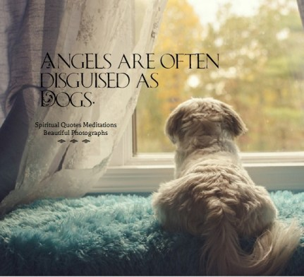 Angels are often disguised as Dogs.. April