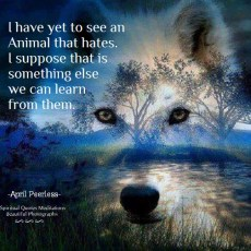 I have yet to see an Animal that hates. I suppose that is something else we can learn from them. April Peerless