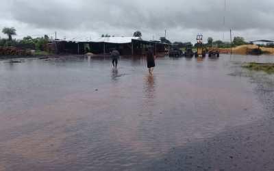 Compleja situación de las forestoindustrias de la Cuenca Centro debido a las lluvias registradas