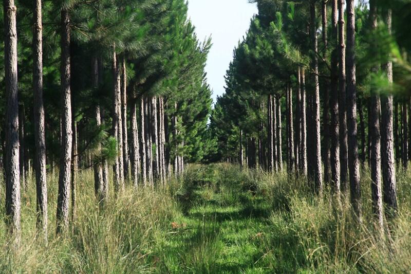La APEFIC alienta la adhesión provincial a la ley nacional de inversiones forestales