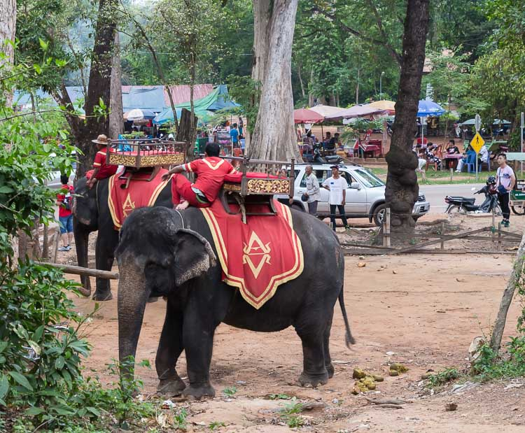 elephant riding in Angkor Wat