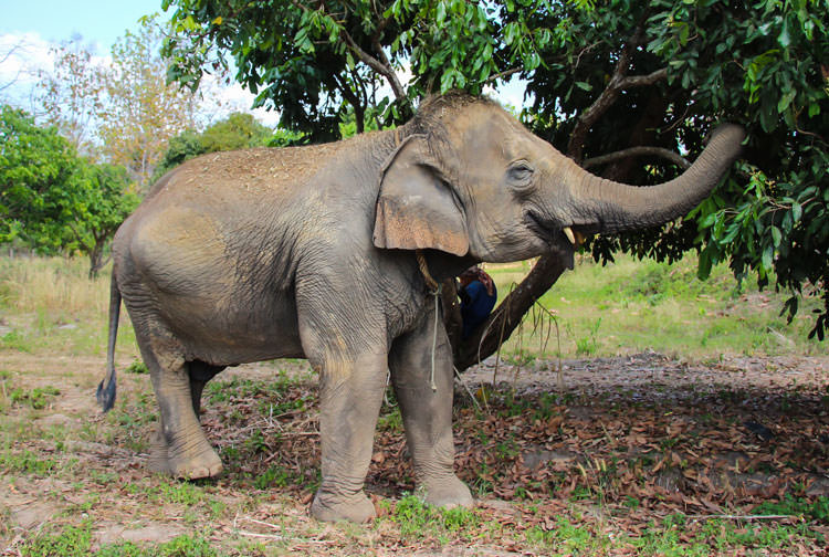 maerim elephant sanctuary review
