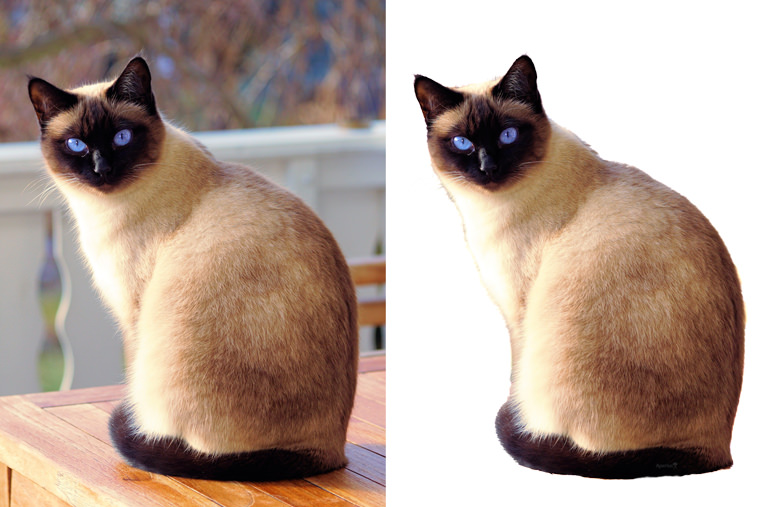 before and after example of topaz mask ai using a cat