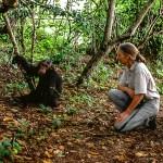 Jane Goodall chimpanzee 57900004