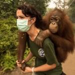 Karmele Llano Sanchez orangutan orphan