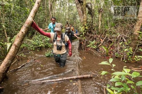 peat swamp rainforest Borneo