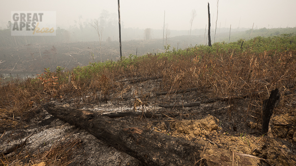 fire haze, slash-and-burn rainforest