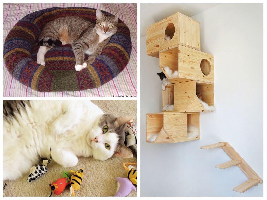 Обработка от блох подстилки и домика кошки