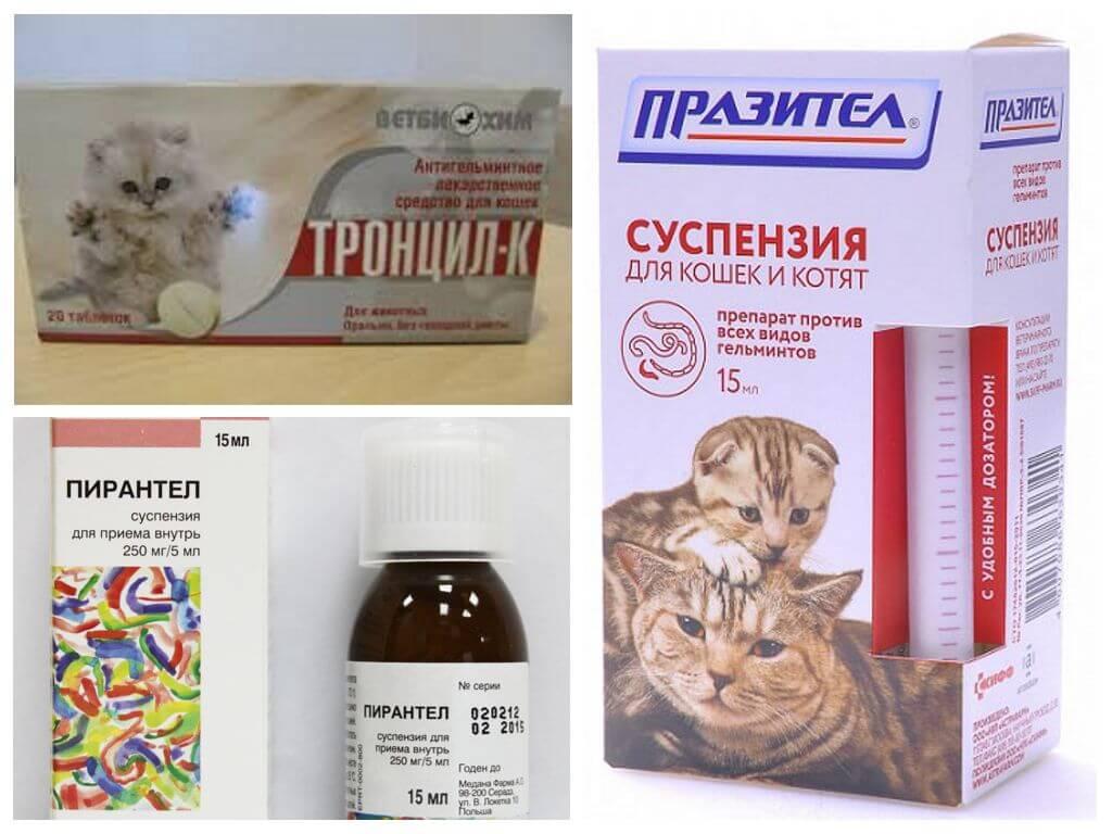 Зуд у кота на спине Сахалинский 3-й переулок