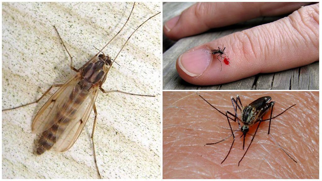 Чем полезны комары в природе