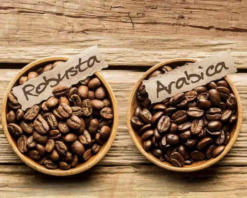 El café robusta aun no se puede sembrar en Costa Rica
