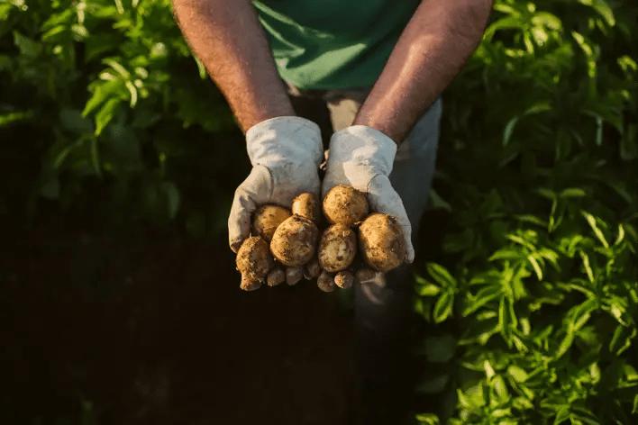 Informe de sostenibilidad para un sistema alimentario más sostenible