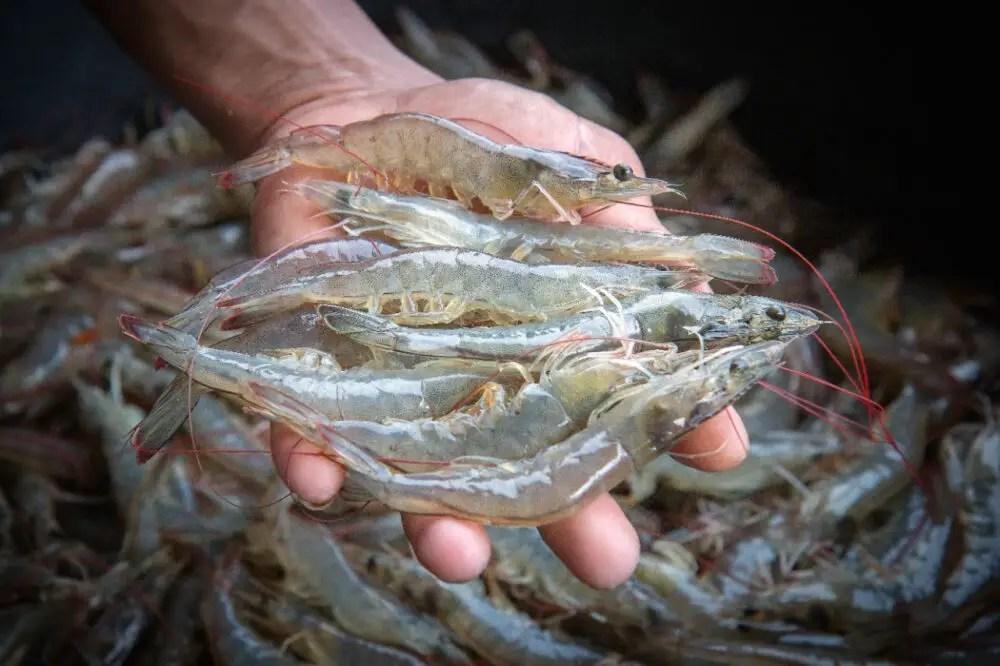 Programa impulsa desarrollo de maricultura en Costa Rica