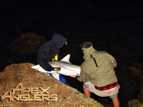 AJ Rotondella and Jake Gruse releasing a Blacktip Shark back into the inlet.