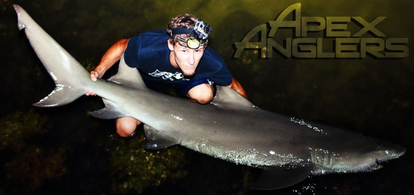 AJ Rotondella - Apex Anglers - Big Lemon Shark 1 copy
