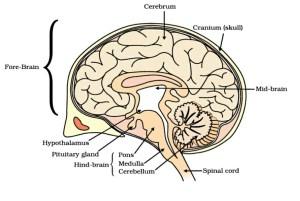 Class 10 Board Exam Important Diagrams (Biology) – Shiksha