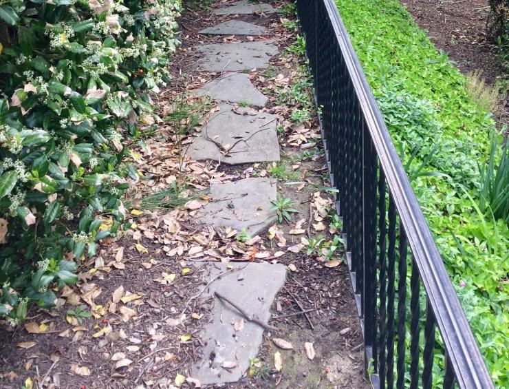 overgrown landscape path
