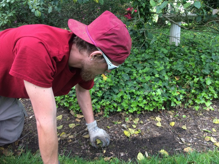 weed removal from beds
