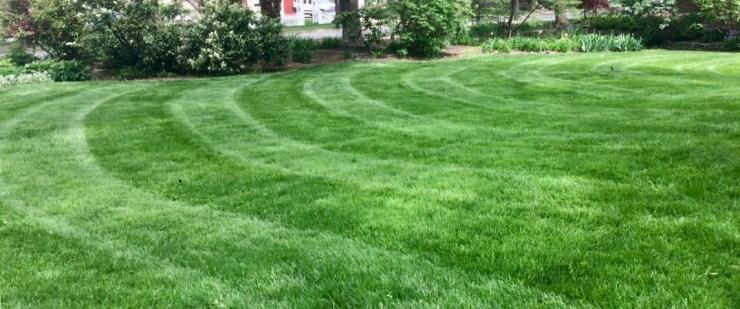 lawn on fertilizer program and leaf mulching