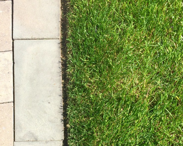 mowed lawn with stressed grass