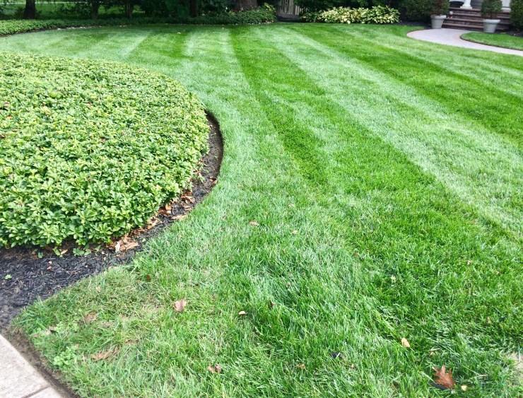 diagonal lawn stripes