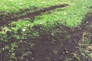 grass seed applied to top soil