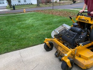 Leaf removal and Fall lawn cut