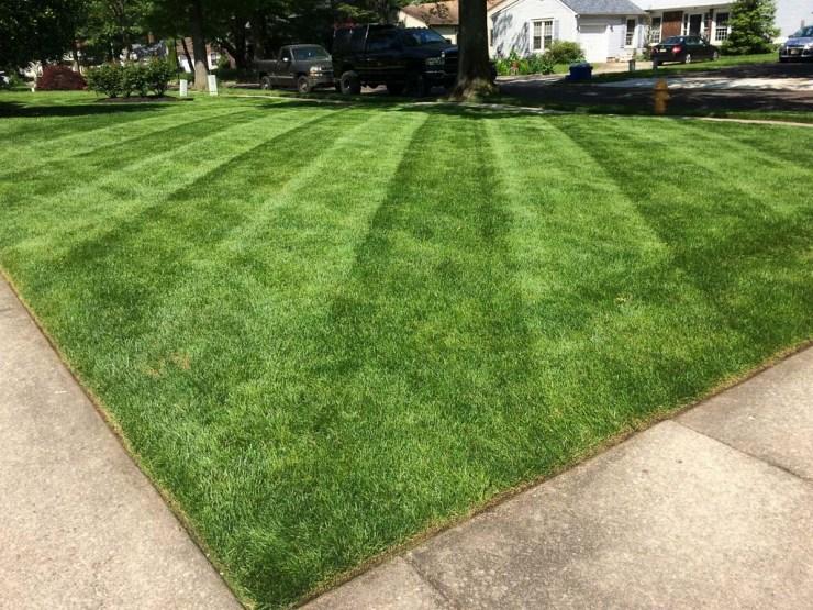 weekly lawn cut visit