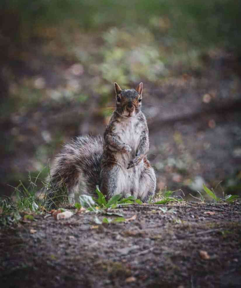 Squirrel services