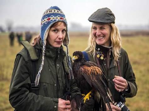 Falcoeiras na Dinamarca