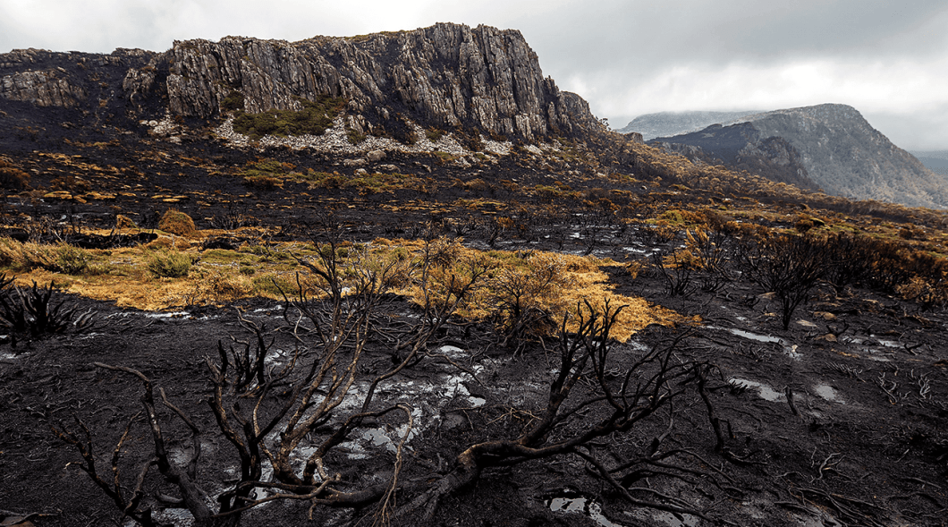 About 120-thousand hectares within Tasmania's World Heritage Area were damaged by wildfires in early 2016.