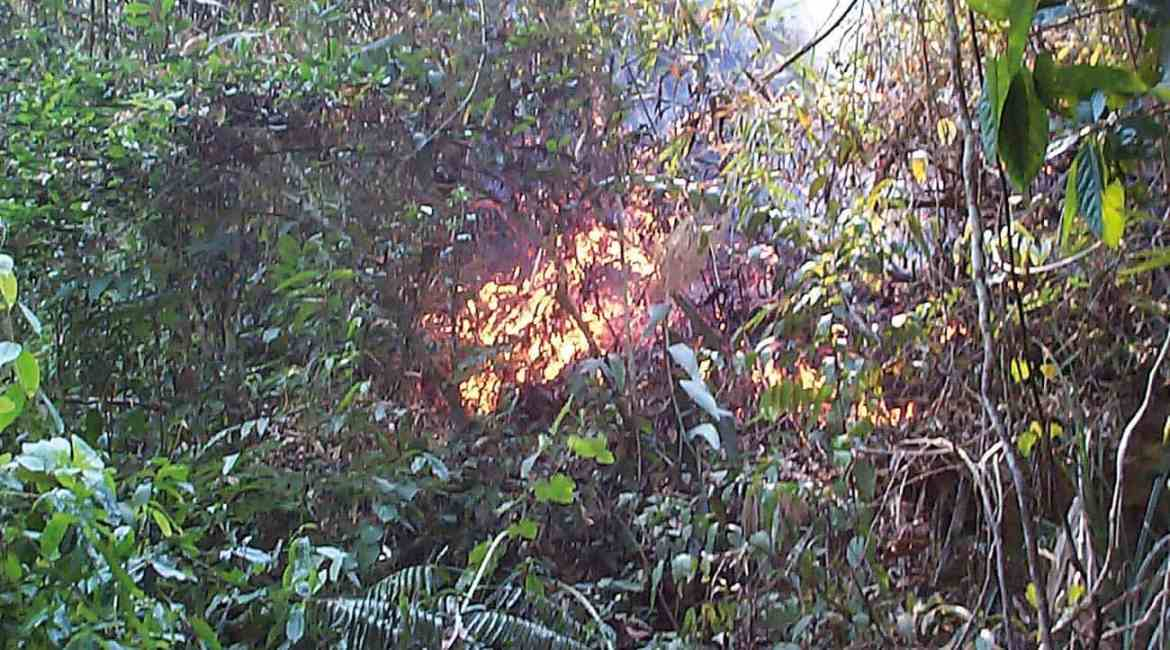 Understory prescribed fire by local communities in evergreen forest, Chiang Mai, Thailand 2015.