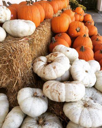 Fall Pumpkin Display
