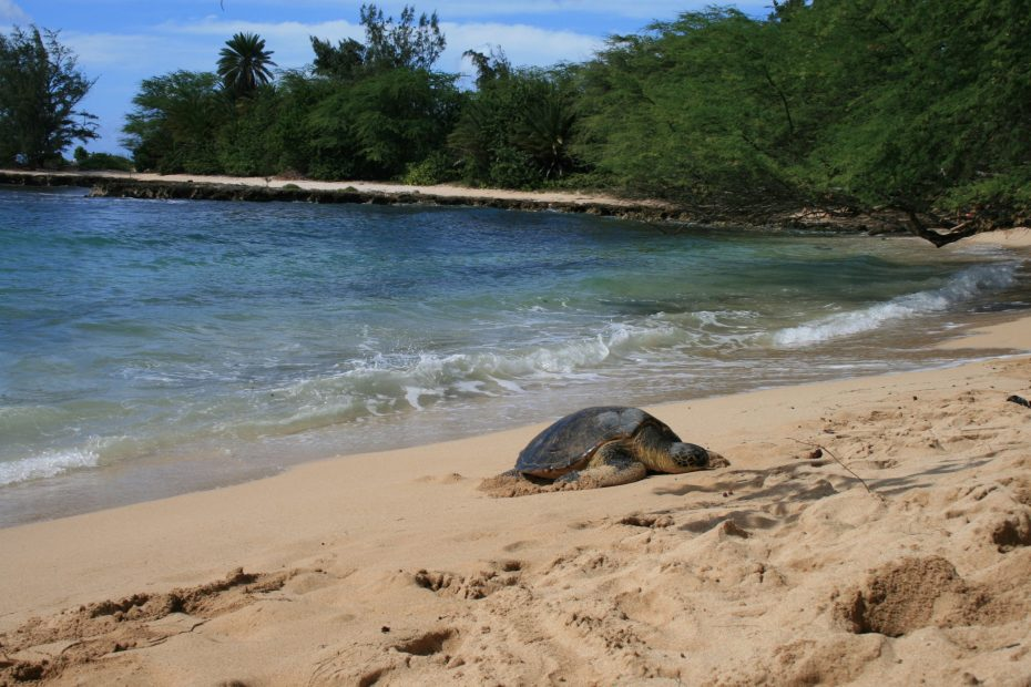 Holiday in Hawai'i🏝