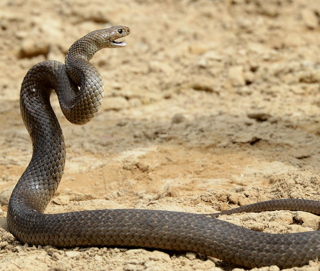 A Train In Japan Was Stopped By A Snake Found Riding Inside Time