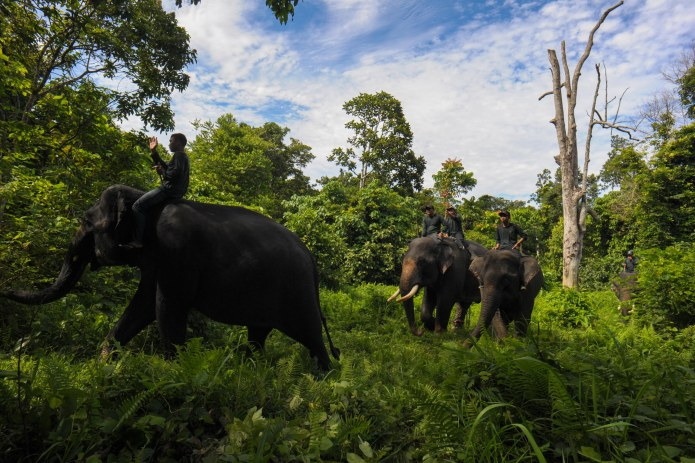 Indonesia S Leuser National Park Is Threatened By Politics Time