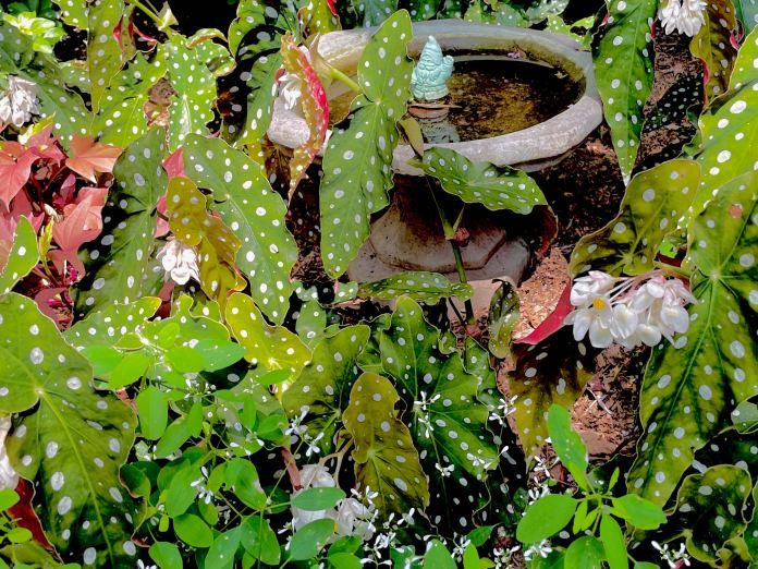 New York City Garden