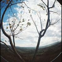 Di albero e Dante