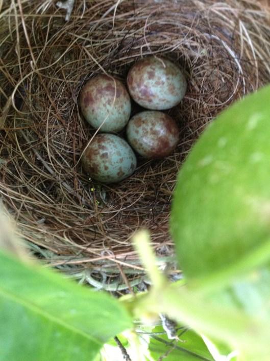 four little eggs.jpg