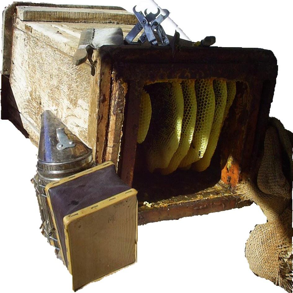 apicultura-tradicional
